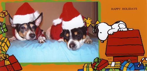 Dogs_05_christmas